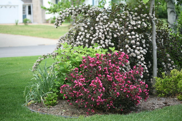 Wine amp roses 174 weigela eclectic landscape chicago by proven
