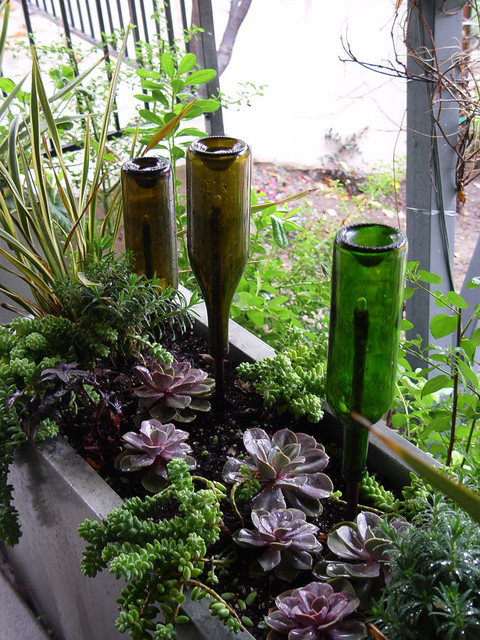 Wine Bottle Succulent Planter Contemporary Landscape