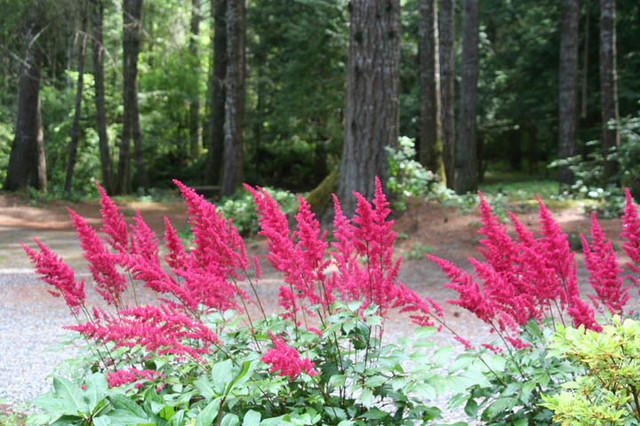 Landscaping Woodland Wa : Woodland event space port orchard wa contemporary