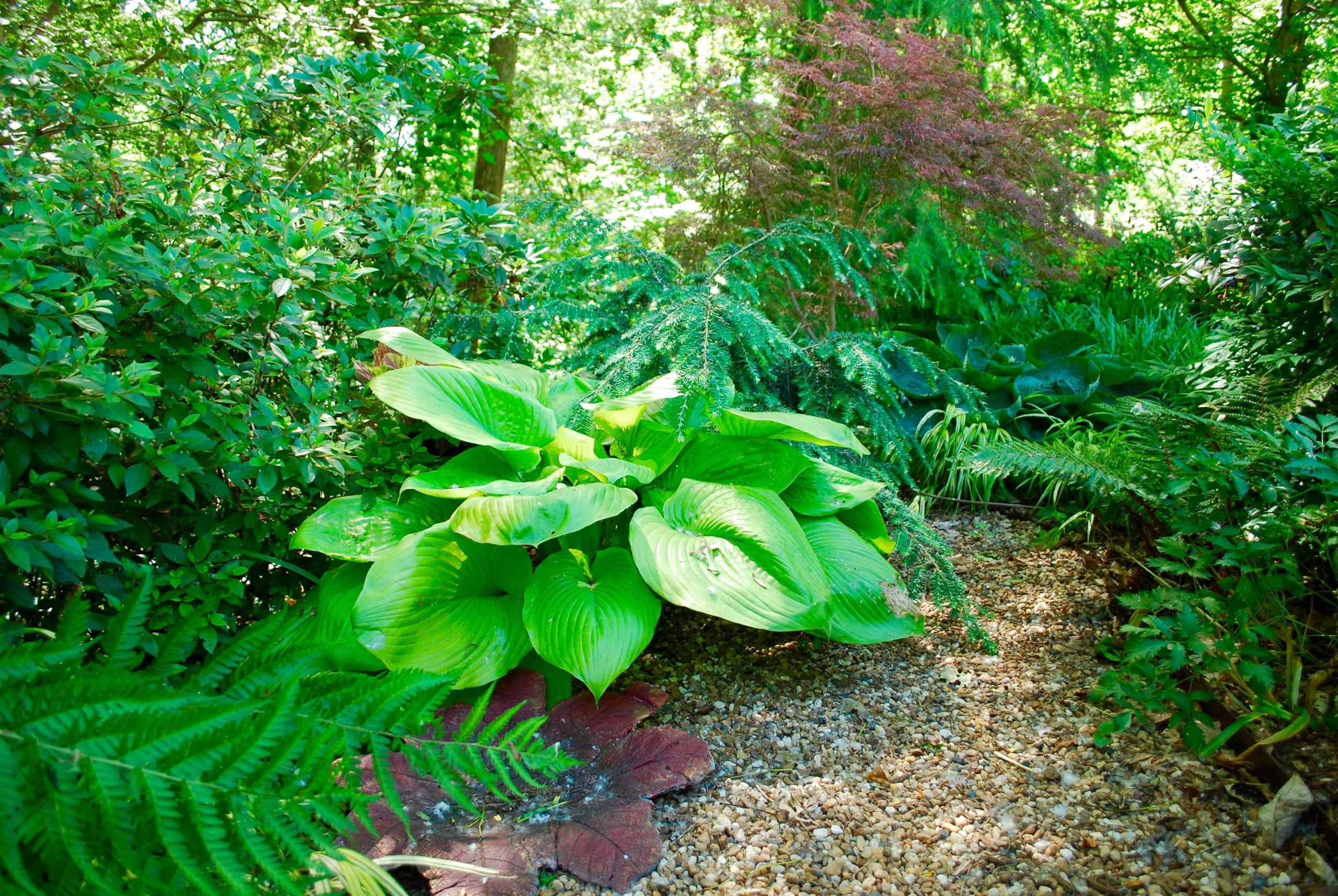 Woodland garden 1