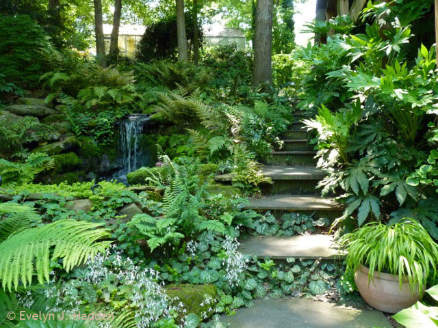 Charmant Woodland Garden   Eclectic   Landscape   Charlotte   By Jay Sifford ...