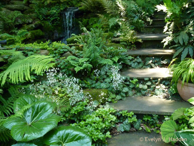 Woodland Garden Design garden design with a woodland garden landscape design portfolio by ann betten of with small front Woodland Garden Eclectic Landscape