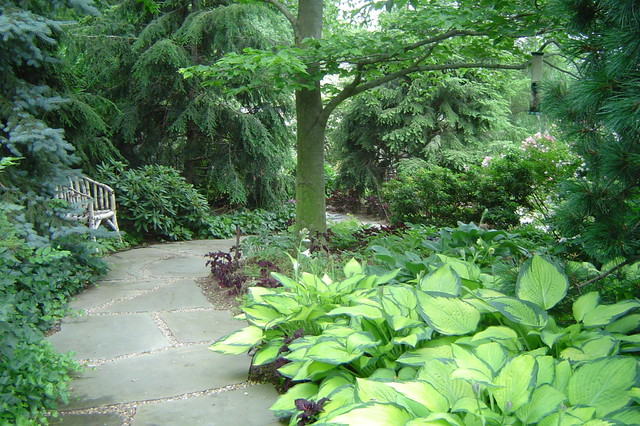 Woodland pathway amongst Hostas traditional-landscape