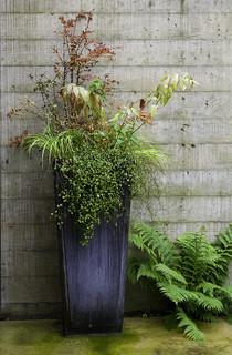 Tall container garden