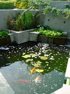 Zen koi floating steps beach plantings bungalow for Koi for sale san diego