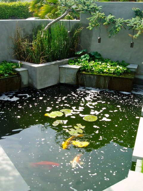 Zen koi floating steps beach plantings bungalow for Contemporary koi pond design