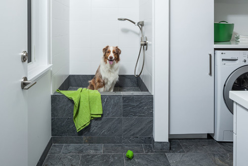 8 tips for installing a dog washing station se vancouver remodel solutioingenieria Gallery