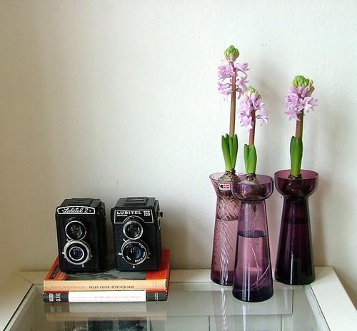 Cameras and hyacinths
