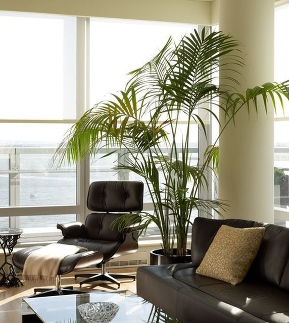 Eames lounge chair - Contemporary - Living Room - other metro - by Hua ...