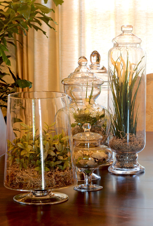 Plant Terrariums for Home Decor