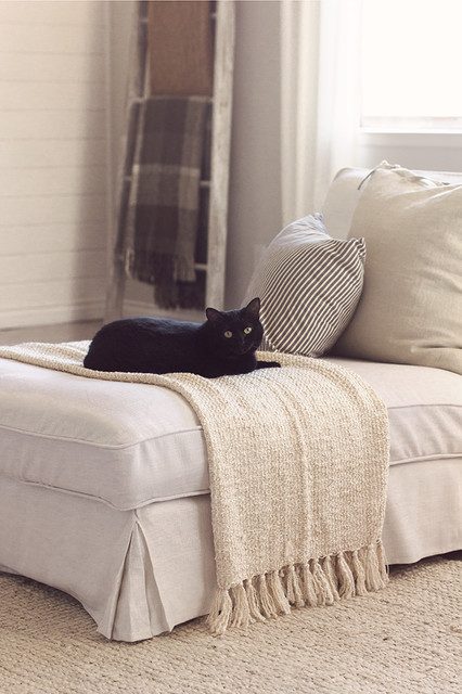 Happy Cat On New White Linen Chaise Lounge Traditional Living Room By C