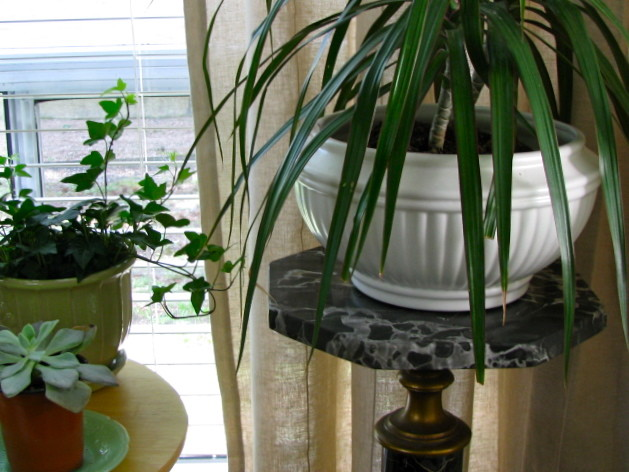 House Plants Eclectic Living Room Part 96