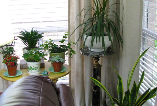 Indoor plants for Living room with indoor plants