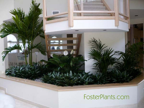 Interior planters, atria and free-standing plants. living-room