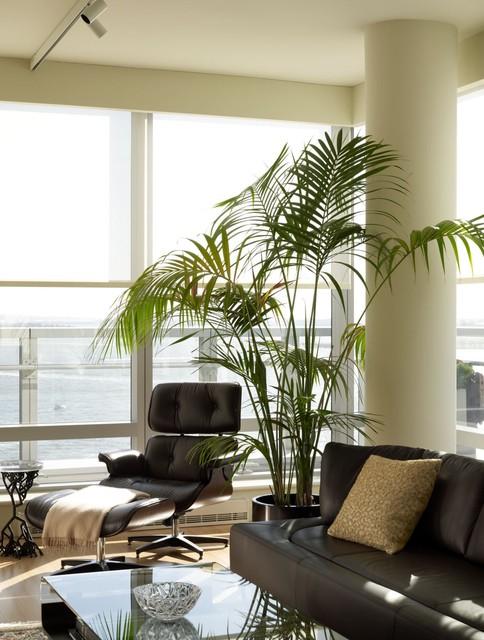 Plantas De Interior Pon Un Toque Verde En Tu Salon