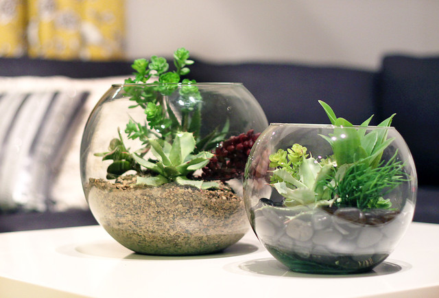 Terrariums Modern Living Room