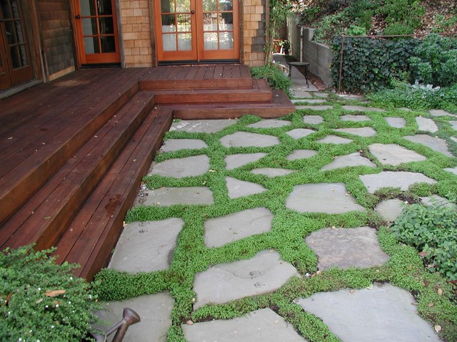 Dry Laid Bluestone Patio with Groundcover traditional-patio