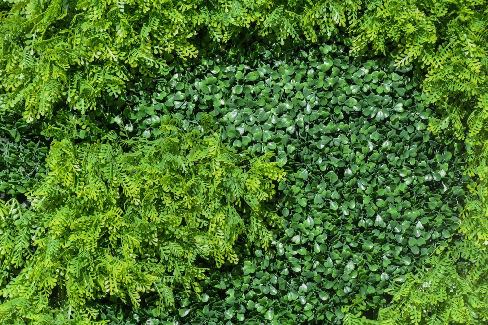 Green Walls - Contemporary - Patio - Los Angeles - by Red Berm on Green Wall Patio id=58260