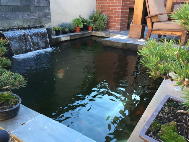 Koi pond asian patio los angeles by creative zen for Used koi pond for sale