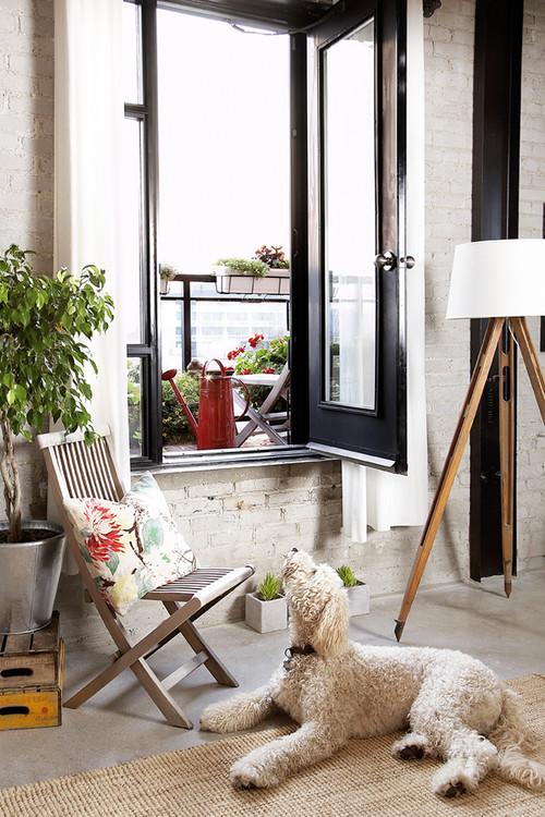 welche zimmerpflanzen sind f r hunde und katzen giftig. Black Bedroom Furniture Sets. Home Design Ideas