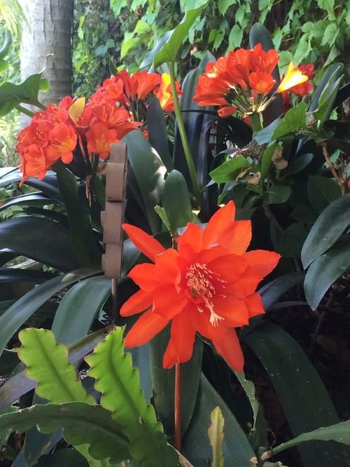 10 Shade Loving Plants Tropical Gardens Houzz