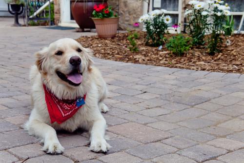 【Houzz】ペットが安全で快適に夏を過ごすためのポイント 11番目の画像