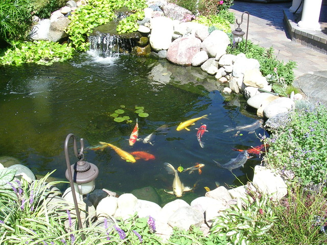 Patio, With Pond, Waterfall, U0026 Koi Mediterranean Patio