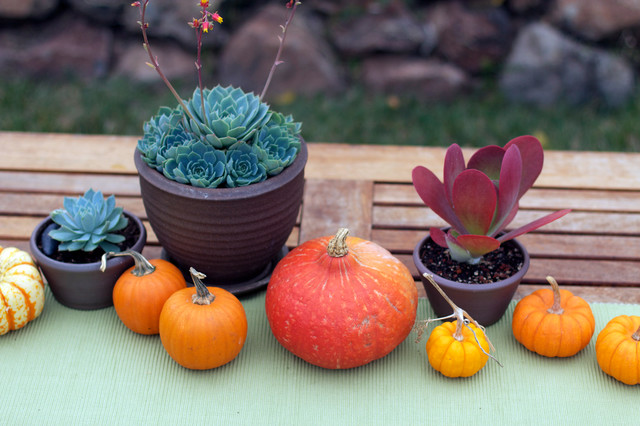 traditional patio Pumpkins