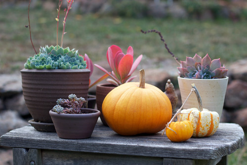 Adam Hunter's Fall decorating tips traditional patio