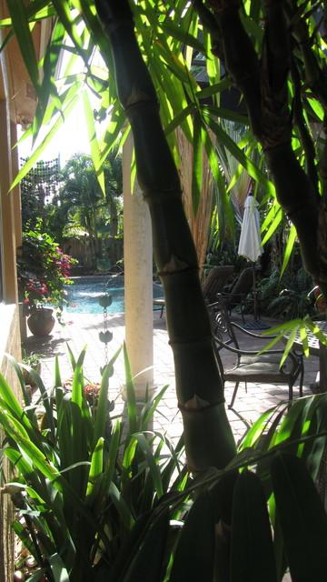 SOUTH FLORIDA tropical-patio
