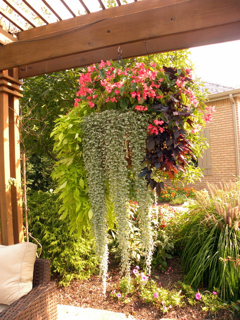 Spring & Summer Containers traditional-patio
