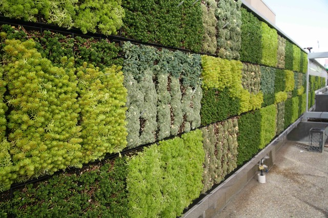 Thomas Jefferson School Of Law Living Wall Contemporary Patio