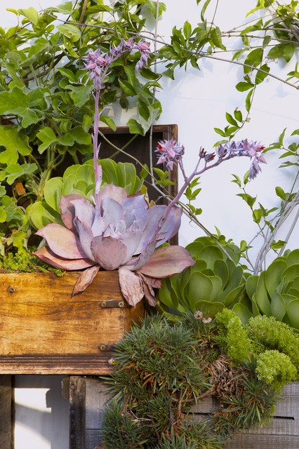 Vibrant Hideaway eclectic-patio