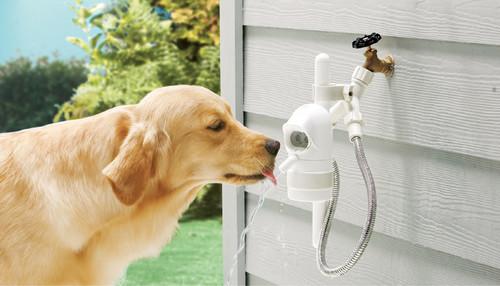 【Houzz】ペットが安全で快適に夏を過ごすためのポイント 15番目の画像