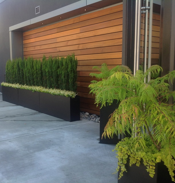 Wood accent wall Contemporary Patio Vancouver by Object