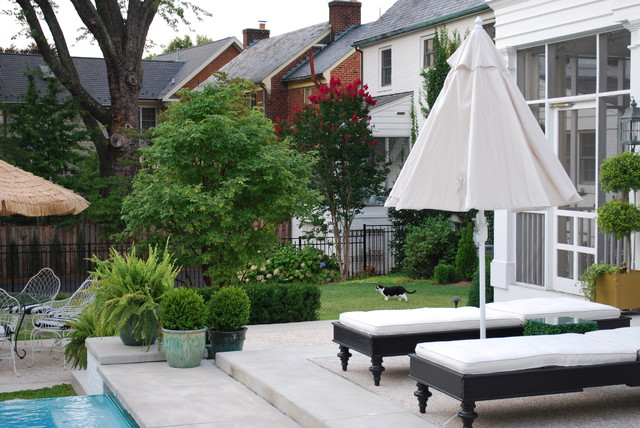 backyard escape contemporary pool