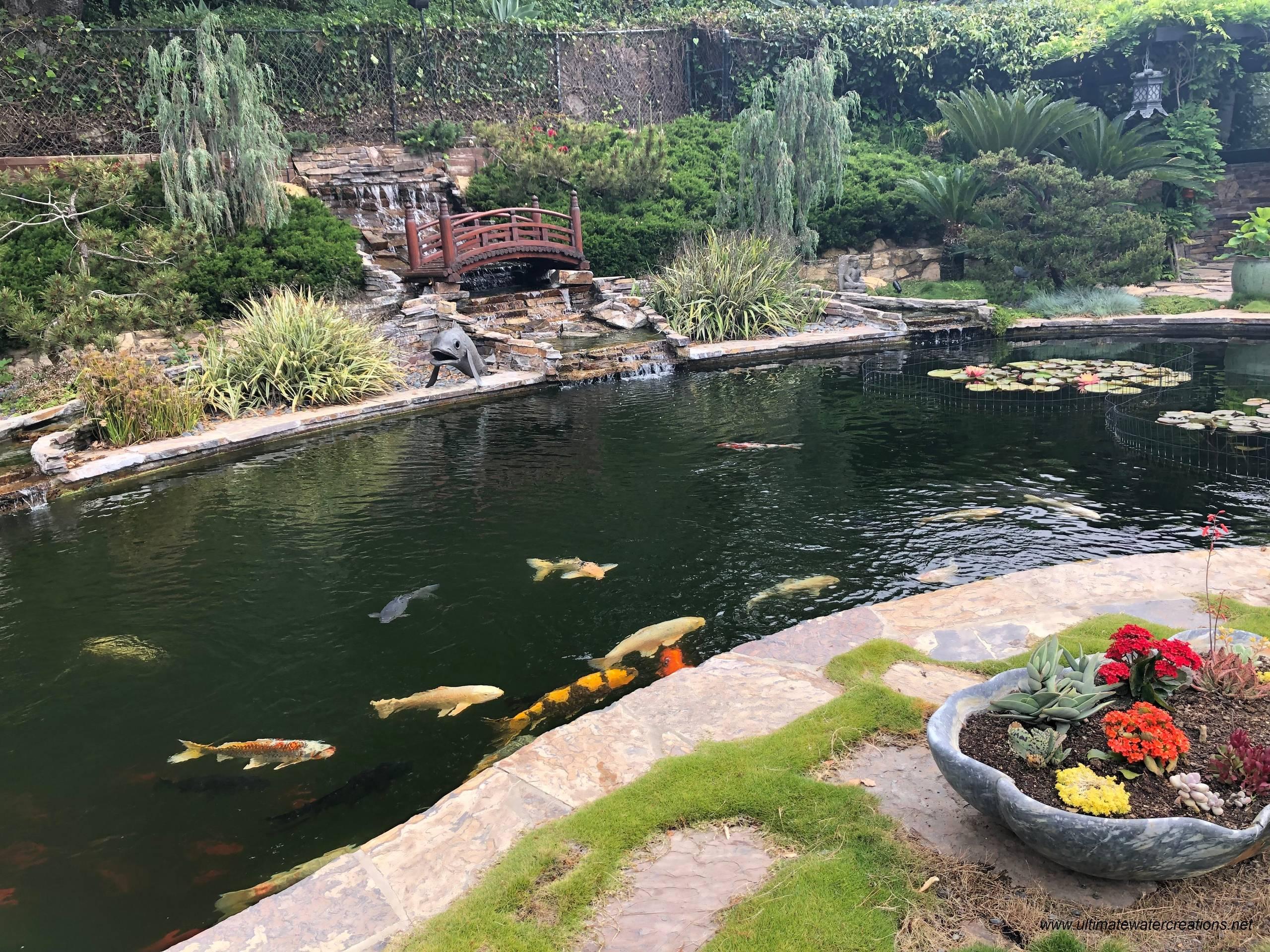 Bel Air - Naturalistic 20'x40' Koi Pond with Landscaping & Bridge