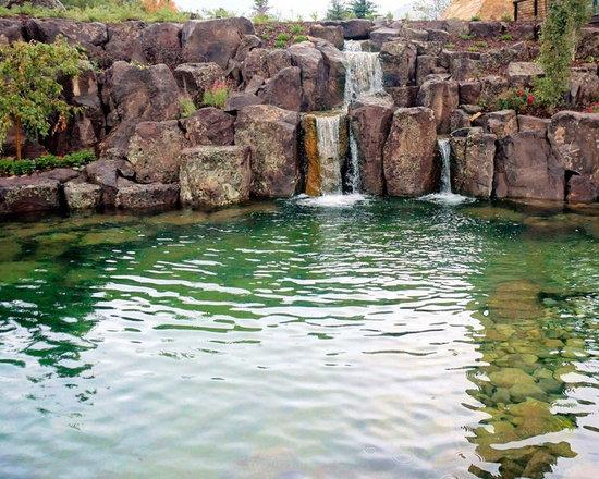 bionova natural swimming pool provo ut