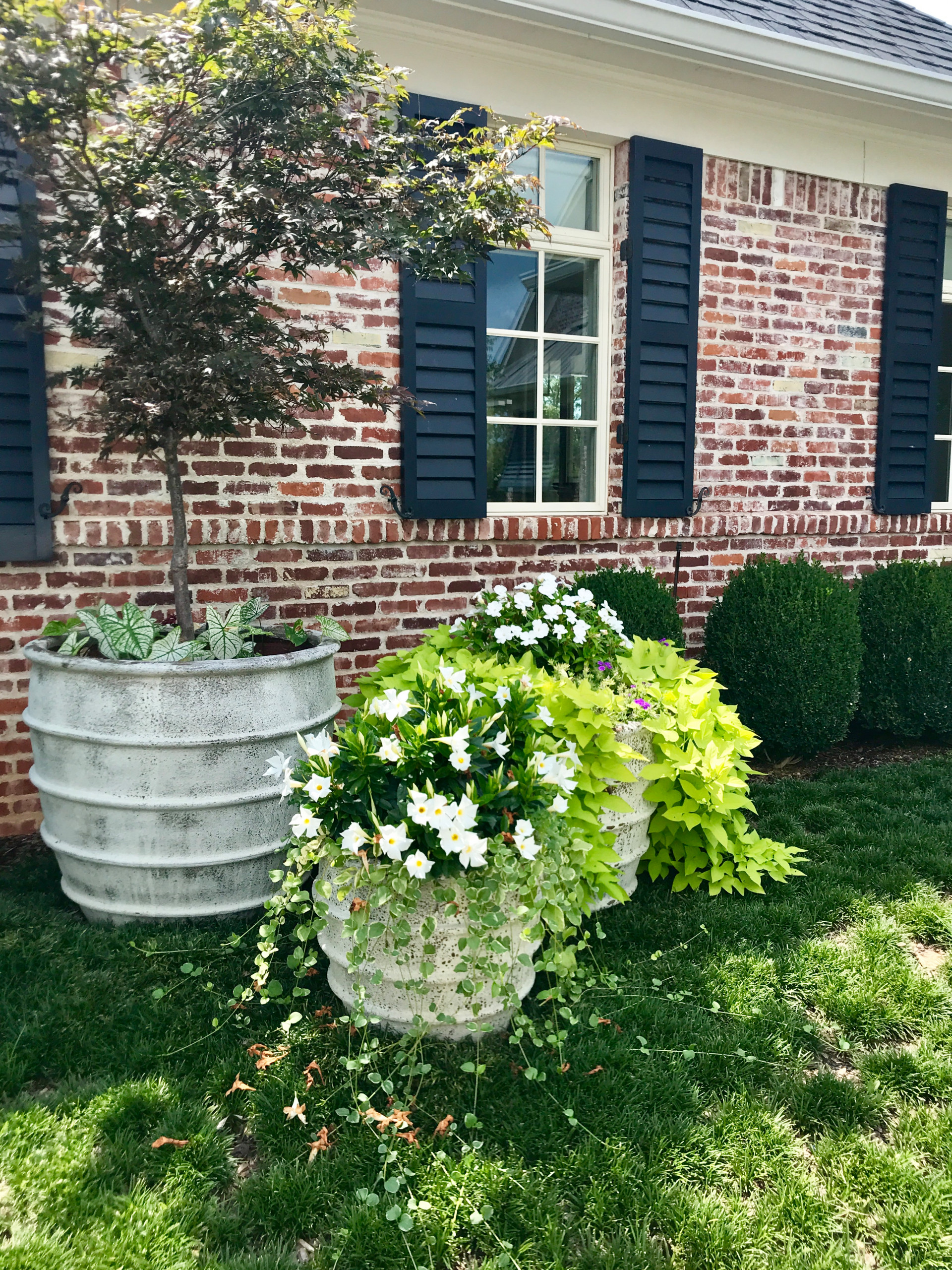 Container Plantings: Classic Spring and Summer
