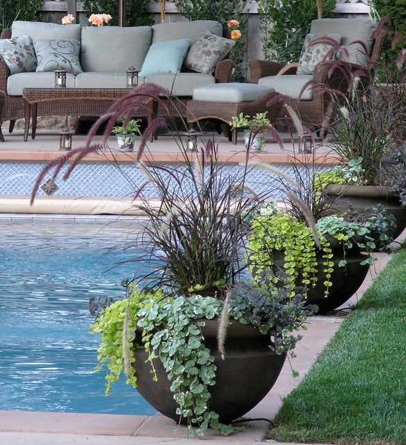 Container potted gardens eclectic pool san for Gardens around pools