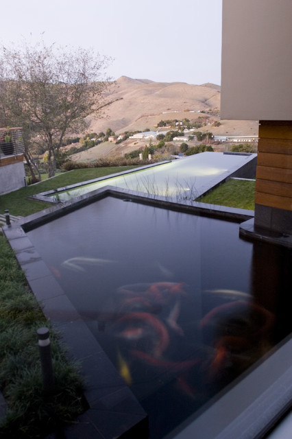 Koi pond contemporary pool for Contemporary pond design
