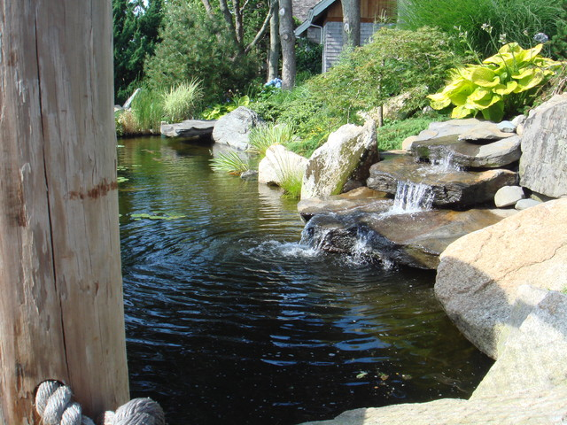 Coy fish pond for Coy fish pond maintenance