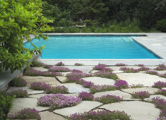 Creeping Thyme Pool Chicago By The Garden