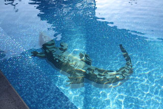 Croc traditional pool by minke pools - Can babies swim in saltwater pools ...
