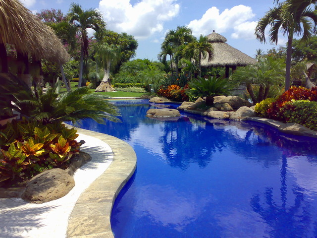 Landscape for Tropical pool gardens