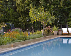 Los Altos Hills Renovation traditional-pool