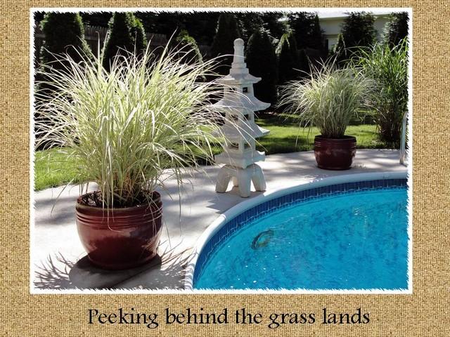 Peeking behind the grass lands asian-pool
