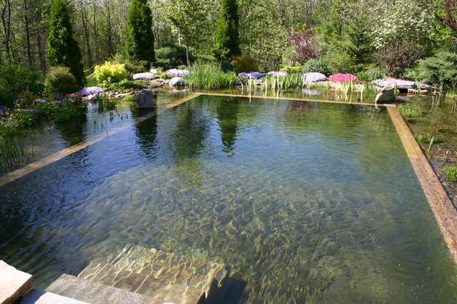 Outdoor natural pool  Pierce Lanucha Natural Swimming Pool - Traditional - Pool ...