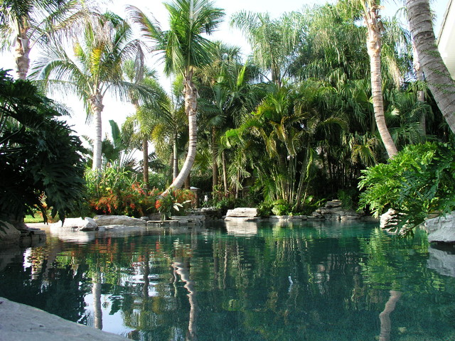 Pool Design tropical pool