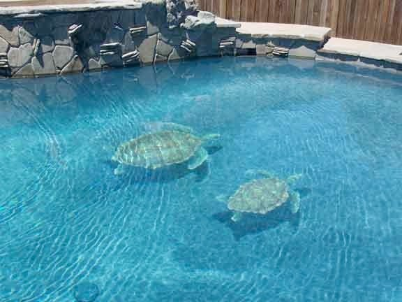 Sea turtle pool tile design pool other by vogland for Pool design tiles